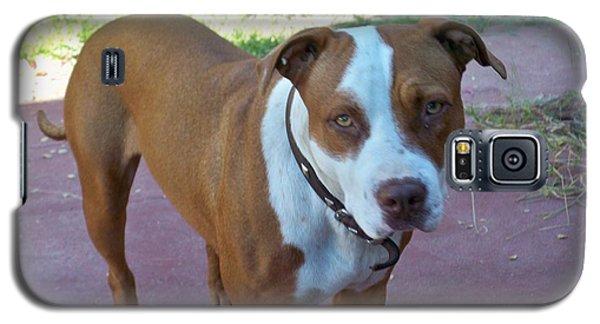 Emma The Pitbull Dog Galaxy S5 Case