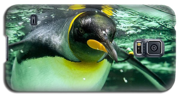 King Penguin Galaxy S5 Case