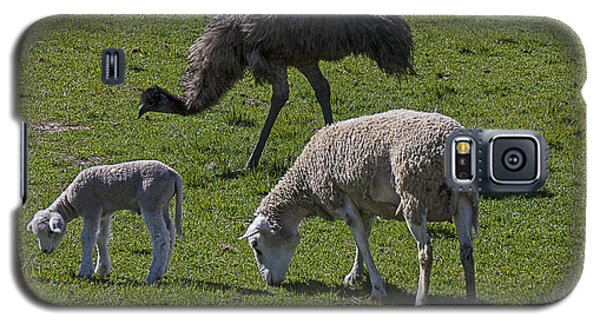 Emu And Sheep Galaxy S5 Case