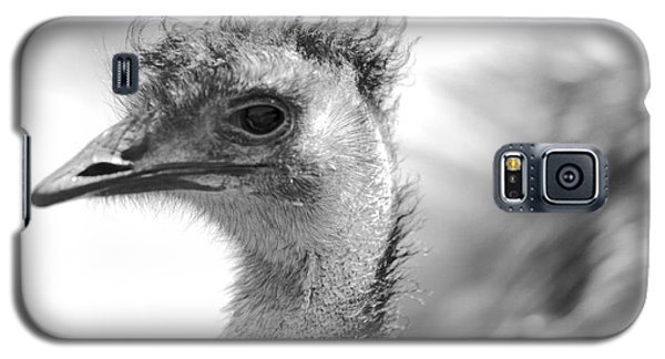 Emu - Black And White Galaxy S5 Case by Carol Groenen