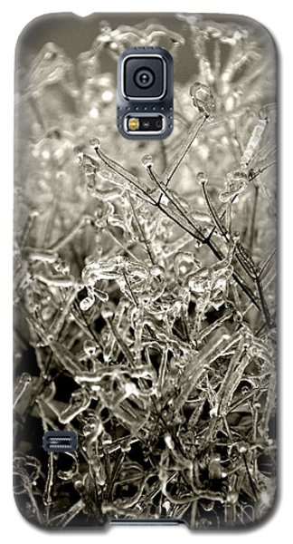 Encased In Ice IIi Galaxy S5 Case by Bonnie Myszka