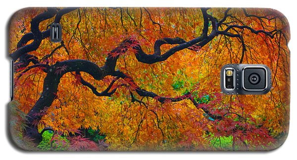 Enchanted Canopy Galaxy S5 Case by Patricia Babbitt