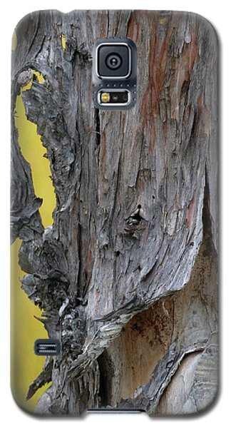 Galaxy S5 Case featuring the painting Enchanted by Newel Hunter
