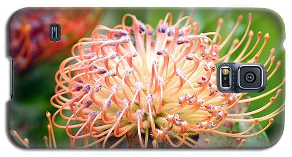 Galaxy S5 Case featuring the photograph Encompassing Proteas by Mary Lou Chmura