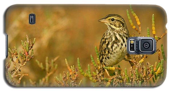 Galaxy S5 Case featuring the photograph Endangered Beldings Savannah Sparrow - Huntington Beach California by Ram Vasudev