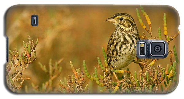 Endangered Beldings Savannah Sparrow - Huntington Beach California Galaxy S5 Case