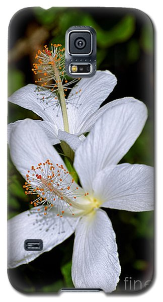 Endangered Koki'o White Hibiscus Galaxy S5 Case