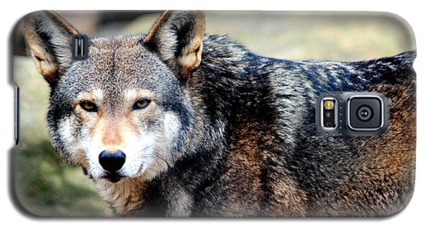 Endangered Red Wolf Galaxy S5 Case