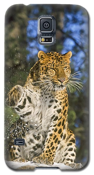 Endantered Leopard Galaxy S5 Case