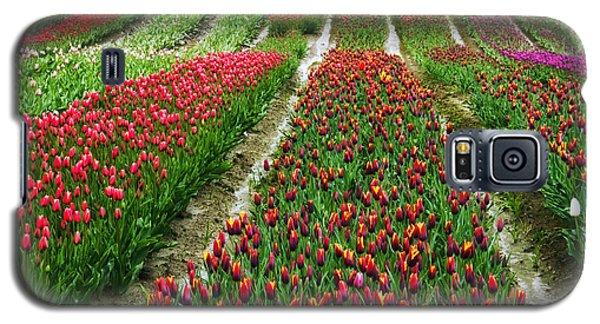 Endless Waves Of Tulips Galaxy S5 Case by Eti Reid