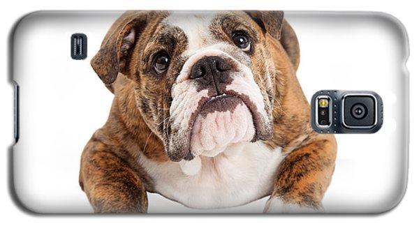 English Bulldog Laying Looking Up Galaxy S5 Case