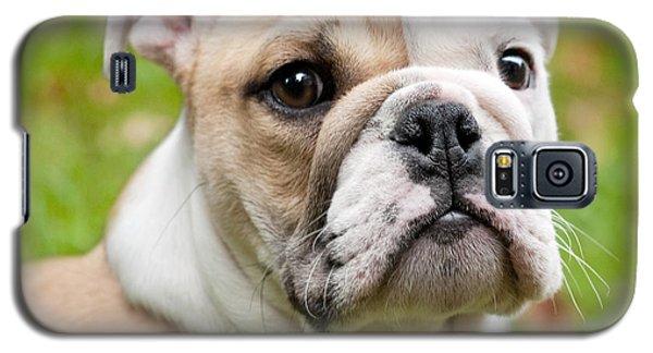 Dog Galaxy S5 Case - English Bulldog Puppy by Natalie Kinnear