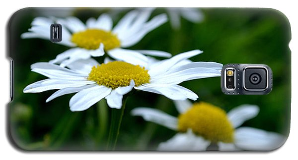 Galaxy S5 Case featuring the photograph English Daisies by Scott Lyons