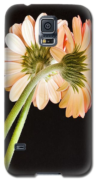 Entwined Galaxy S5 Case