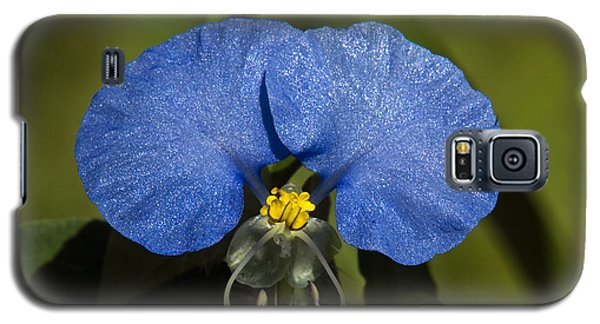 Erect Dayflower  Commelina Erecta Dsmf096 Galaxy S5 Case