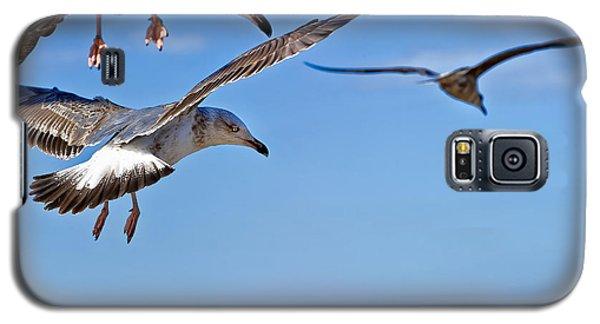Essaouira Seagull Galaxy S5 Case