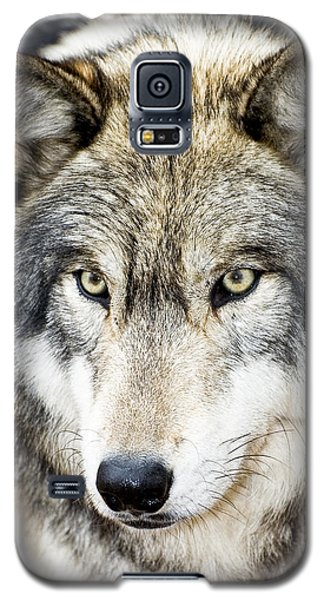 Galaxy S5 Case featuring the photograph Essence Of Wolf by Gary Slawsky