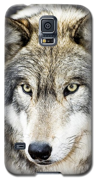 Essence Of Wolf Galaxy S5 Case by Gary Slawsky