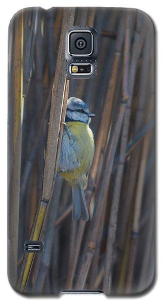 Galaxy S5 Case featuring the photograph Eurasian Blue Tit - Parus Caeruleus by Jivko Nakev