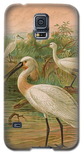 Eurasian Spoonbill Galaxy S5 Case by Rob Dreyer