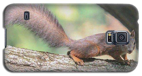 Galaxy S5 Case featuring the photograph Euroasian Red Squirrel - Sciurus Vulgaris by Jivko Nakev