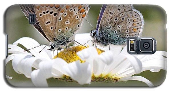 European Common Blue Butterflies Galaxy S5 Case by Doris Potter