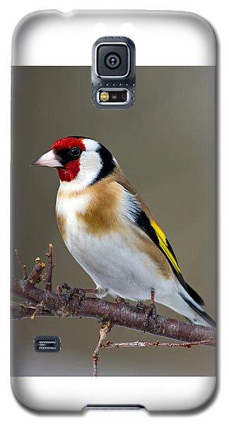 European Goldfinch  Galaxy S5 Case