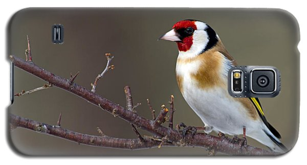 European Goldfinch  Galaxy S5 Case by Torbjorn Swenelius