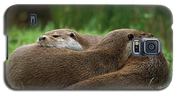 European River Otter Lutra Lutra Galaxy S5 Case by Ingo Arndt