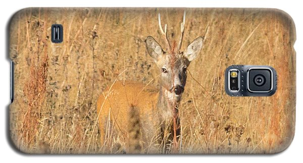 Galaxy S5 Case featuring the photograph European Roe Deer by Jivko Nakev