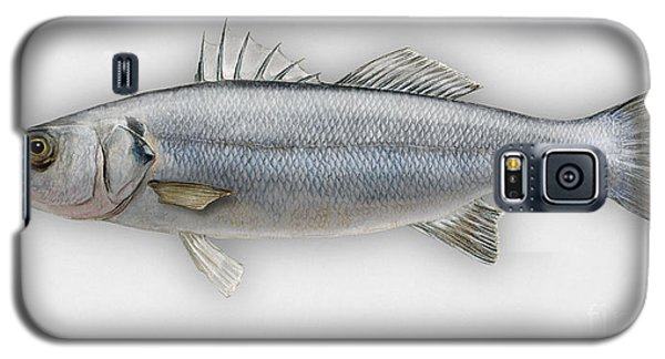 European Seabass Dicentrarchus Labrax - Bar Commun - Loup De Mer - Lubina - Havabor - Seafood Art Galaxy S5 Case