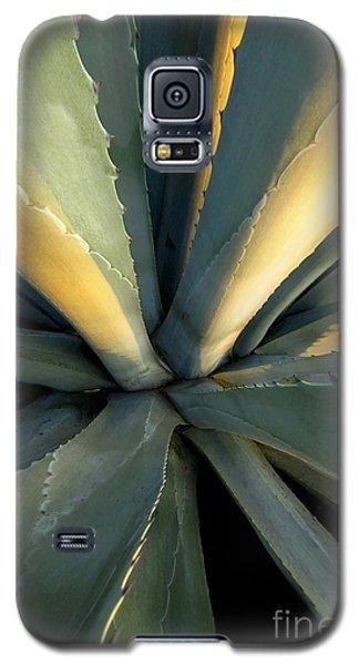 Evening Agave Galaxy S5 Case by Ellen Cotton