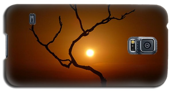 Evening Branch Original Galaxy S5 Case