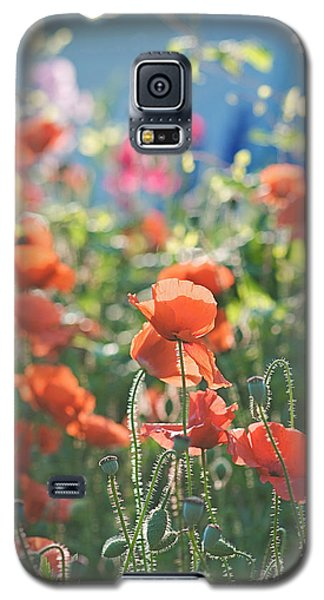 Evening Lights The Poppies Galaxy S5 Case by Lisa Knechtel