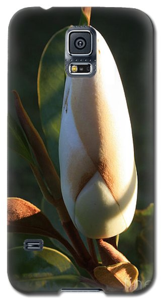 Evening Magnolia Bud Galaxy S5 Case