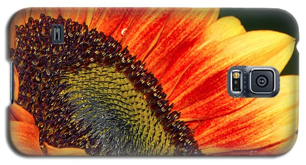Evening Sun Sunflower Galaxy S5 Case