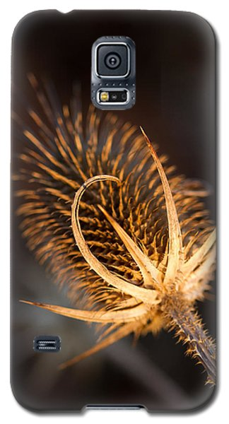 Galaxy S5 Case featuring the photograph Evening Thistle by Haren Images- Kriss Haren