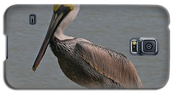 Everglades Brown Pelican Galaxy S5 Case