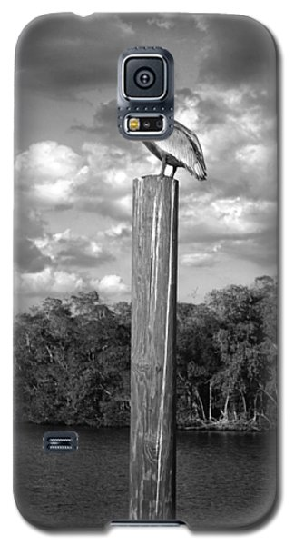 Galaxy S5 Case featuring the photograph Everglades Pelican by Timothy Lowry