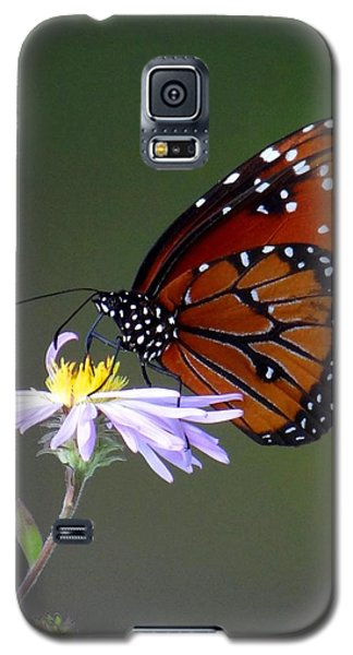 Everglades Queen Galaxy S5 Case