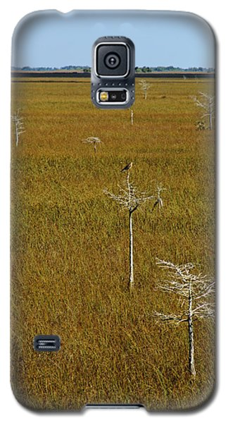 Everglades View Galaxy S5 Case