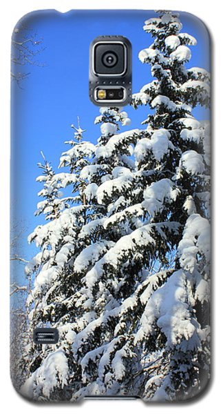 Evergreen Trees In Winter Galaxy S5 Case by Jim Sauchyn