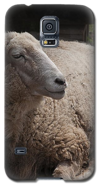 Ewe Galaxy S5 Case by Terry Rowe