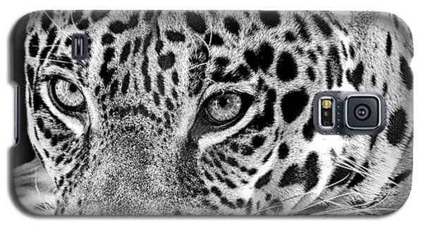 Galaxy S5 Case featuring the photograph Exotic Jaguar by Ruth Jolly