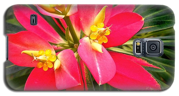 Exotic Red Flower Galaxy S5 Case
