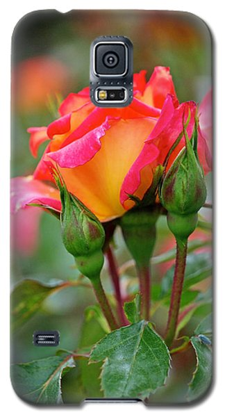 Eye Candy Galaxy S5 Case by Rona Black