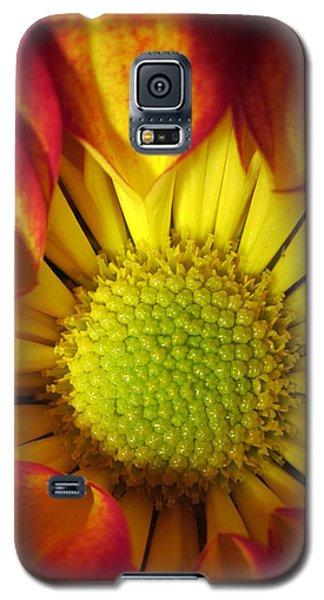 Eye Candy Galaxy S5 Case