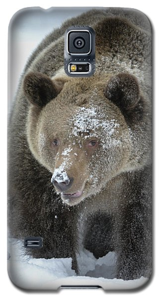 Eye Of Grizzly Galaxy S5 Case
