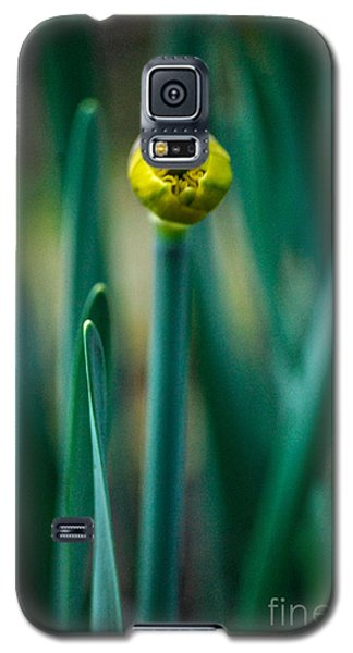 Galaxy S5 Case featuring the photograph Eye Of The Daffodil by Cynthia Lagoudakis
