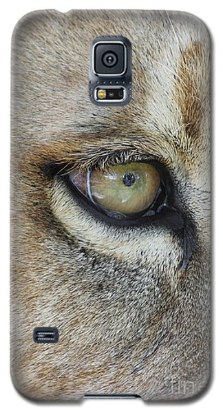 Galaxy S5 Case featuring the photograph Eye Of The Lion by Judy Whitton